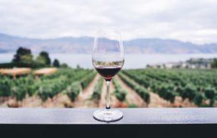 Wine Aroma Vineyard